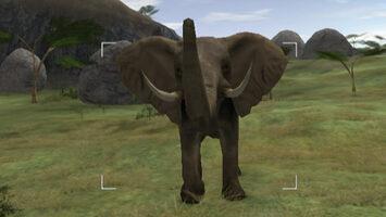 Buy Wild Earth: African Safari Wii
